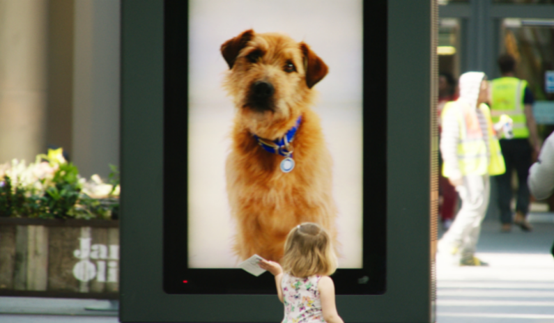 REAL Digital helps Battersea Dogs & Cats Home with RFID